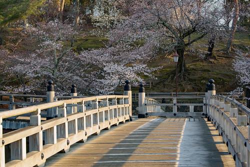 japan 奈良県 奈良市 奈良公園 浮見堂 桜 cherry 寺院 temple 日の出 sunrise