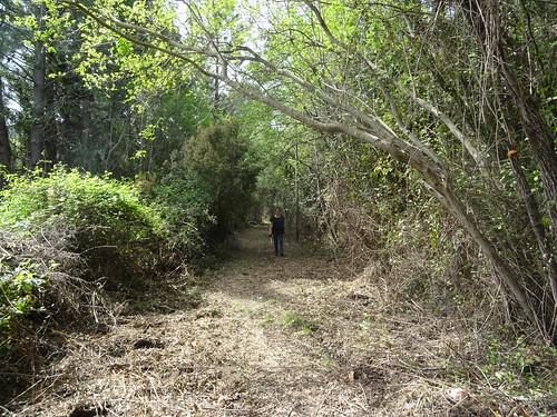 Retour vers le pont de Figa Bona sur le sentier démaquisé