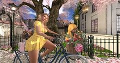 butterflies, bunnies and bicycles