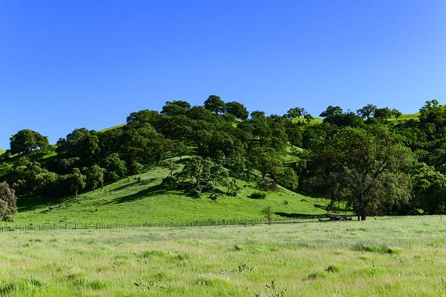 Green Morgan Hill