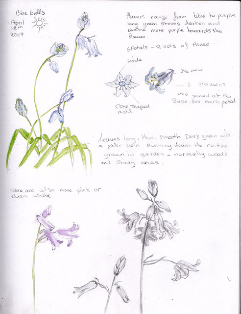 nature journal page of bluebells