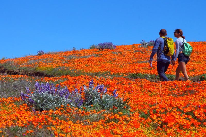 IMG_6582 Antelope Valley California Poppy Reserve