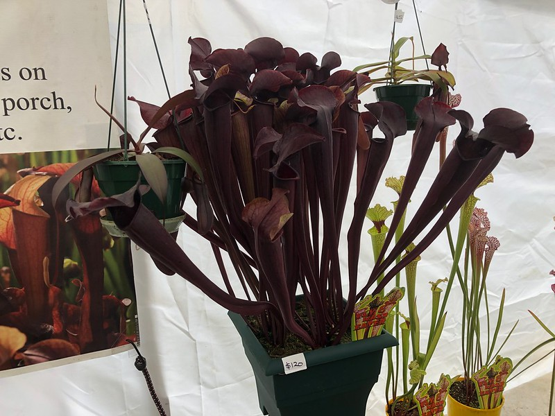 Triffid Park's display at the Melbourne International Flower Show, 2019