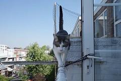 Balancing act. #catsofinstagram #RicohGR #RicohGR3