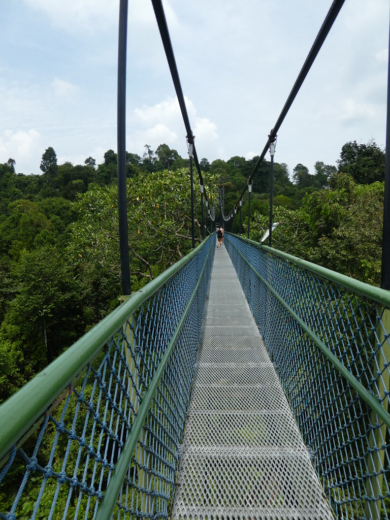 Suspension Bridge, MacRitchie Trail, Singapore