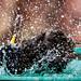 Starling bath time ... full trottle 1 by Stu McCannell