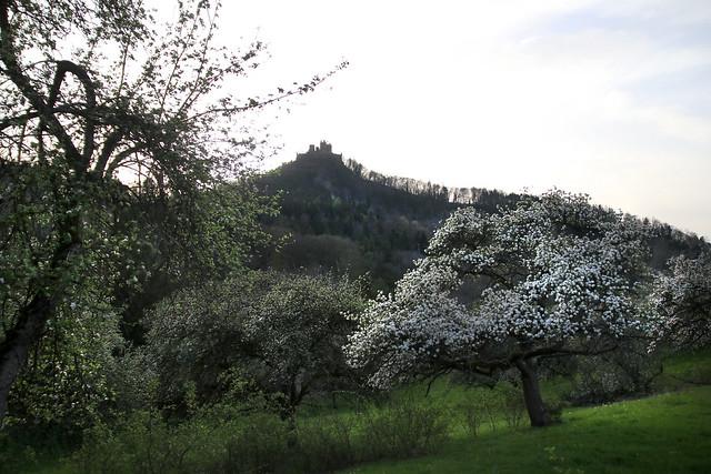 springtime on the swabian Alb