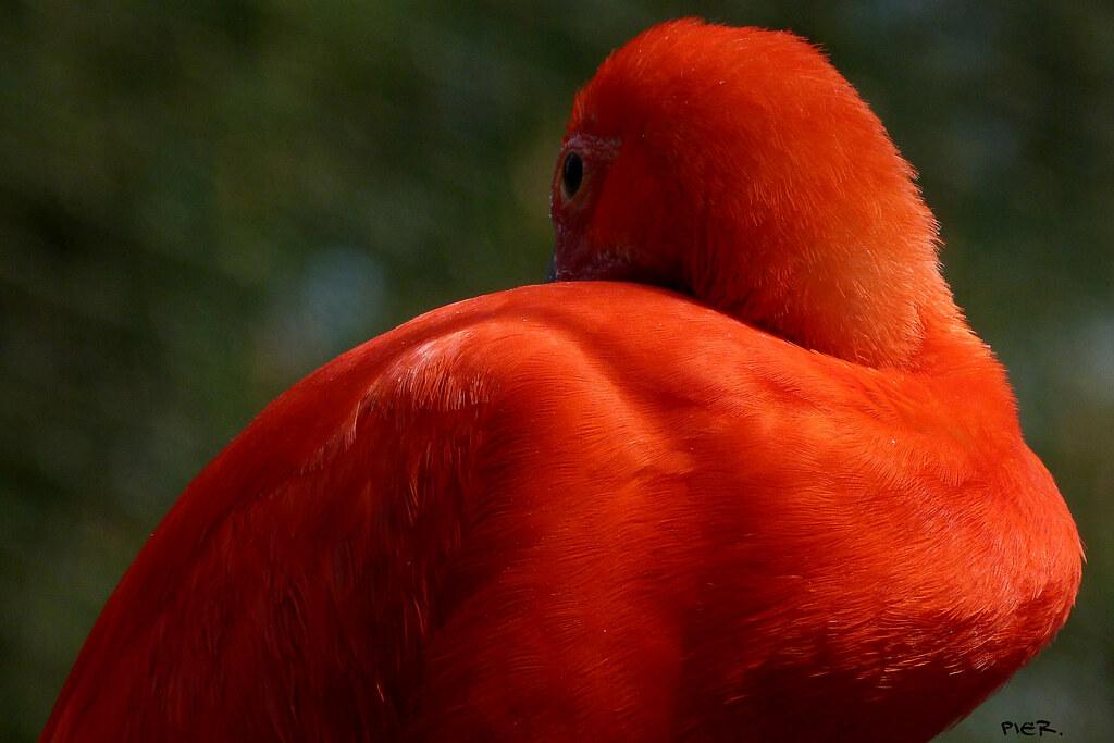 oiseau ...Domaine de la Bourbansais(35)