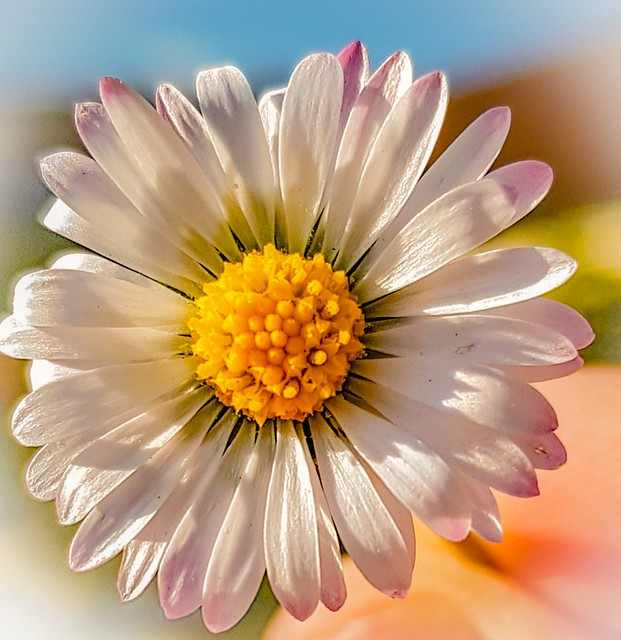 Blüte...