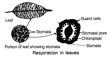 Respiration in Organisms Class 7 Notes Science Chapter 10 5