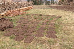 "Apr/2019 - Cattle dung is formed into flat cakes that are laid out in the sun to dry. It is then stacked into little ""walls"" for storage, and later used as fuel for cooking traditional bred (injera) (photo credit: ILRI/Sonja Leitner)."