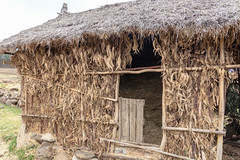 Apr/2019 - Barn made from eucalypt timber and leaves to store hay during the rainy season (photo credit: ILRI/Sonja Leitner).