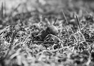 Moments of past.. old cracked nut   by FromMoscowWithLove