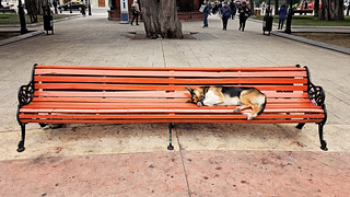 Bench, yes that's a good place to nap.
