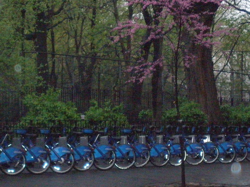 Still Life with Citibike