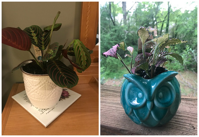 Plants in new pots