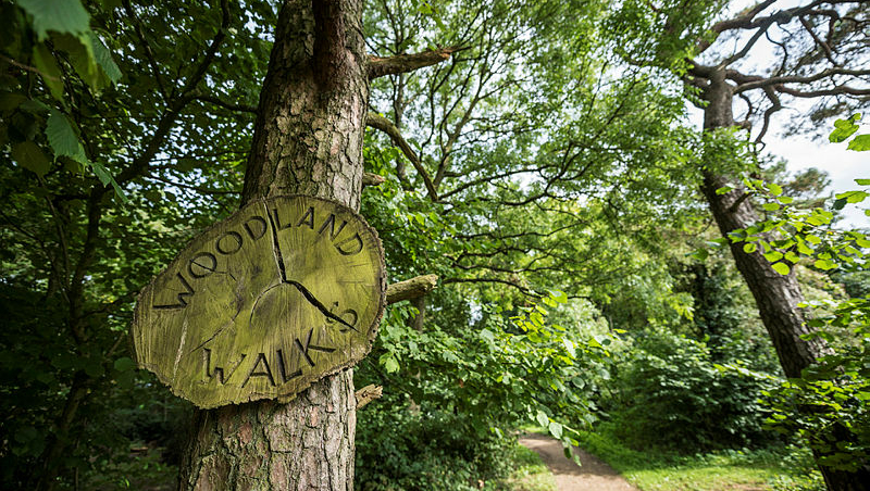 The Woodland Walks sign in the woods on the Claverton Down campus