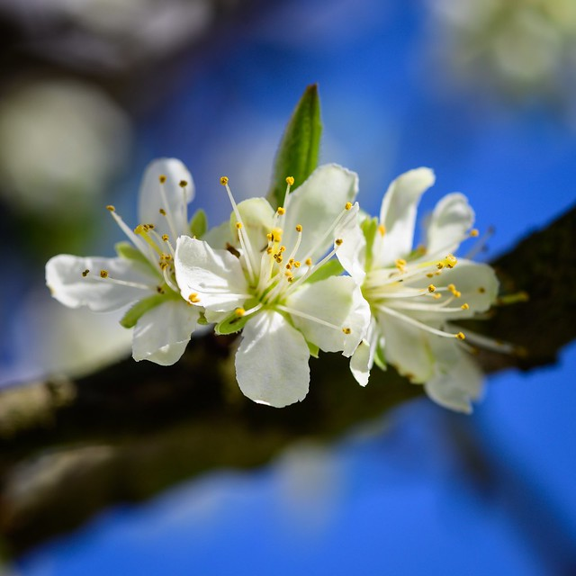 Under the plum tree ☀️🌳