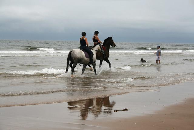 Horses on Coatham Sands, Redcar