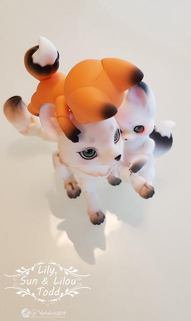 ✰ Ma famille de kitsune (p. 20) - Page 20 32756633727_331db90f45_z