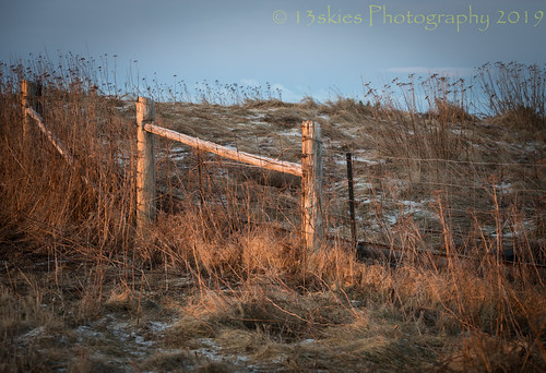 sunrising golden wire sonya99 grasses road industrialarea hill snow wirefence wooden hff happyfencefriday fence fencefriday