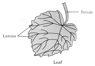 Getting to Know Plants Class 6 Notes Science Chapter 7 3