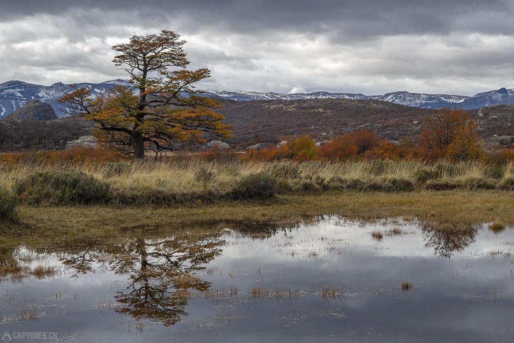 Tree reflection - El Chalten