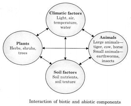 The Living Organisms and Their Surroundings Class 6 Notes Science Chapter 9 4