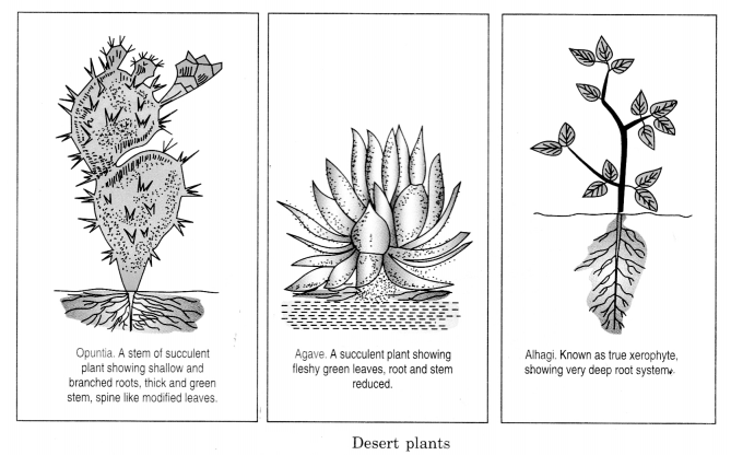 The Living Organisms and Their Surroundings Class 6 Notes Science Chapter 9 3
