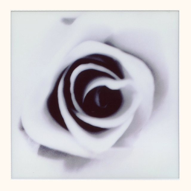 Rose (finale)