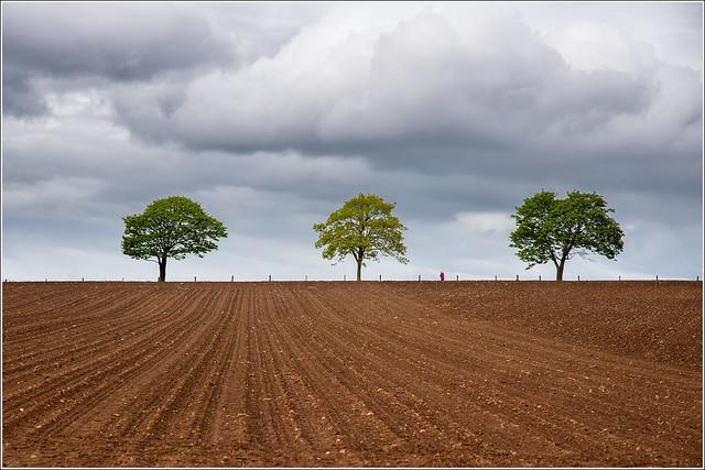 trees plus red