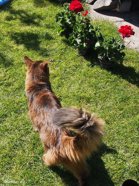 The garden supervisor - Happy Caturday