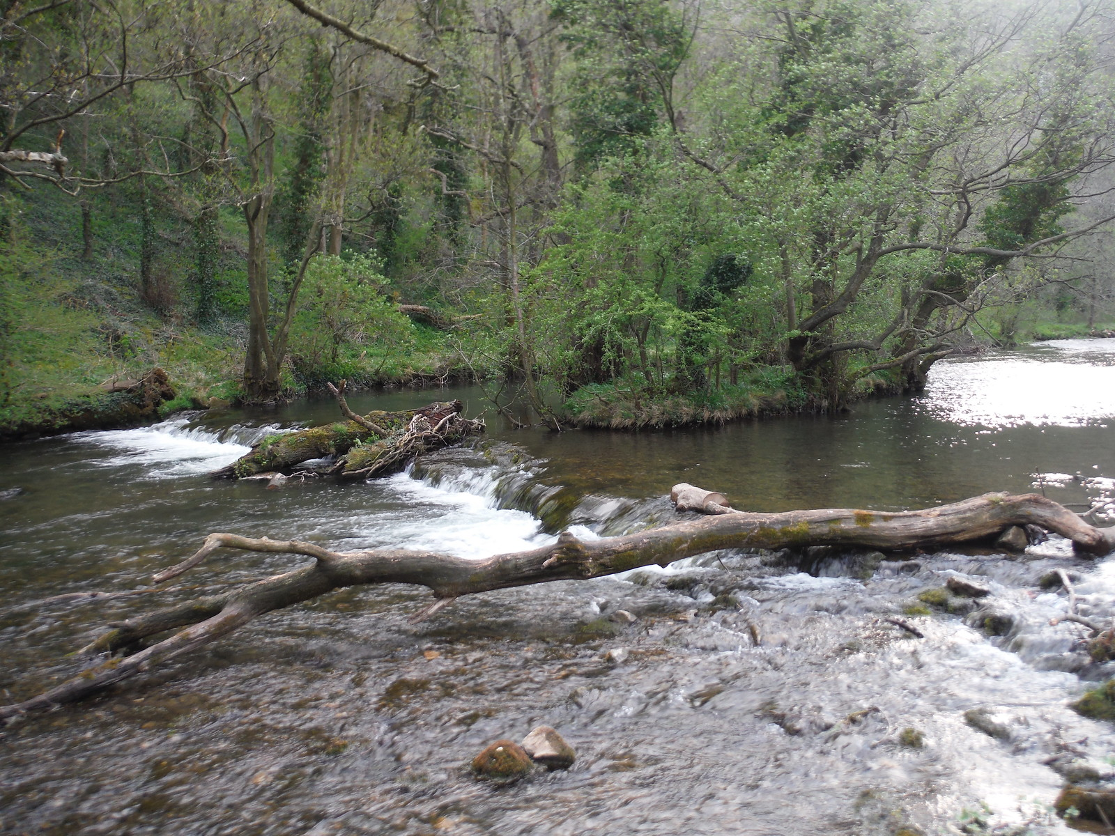 Little Island in The Dove SWC Walk 326 - Dovedale (Ashbourne Circular)