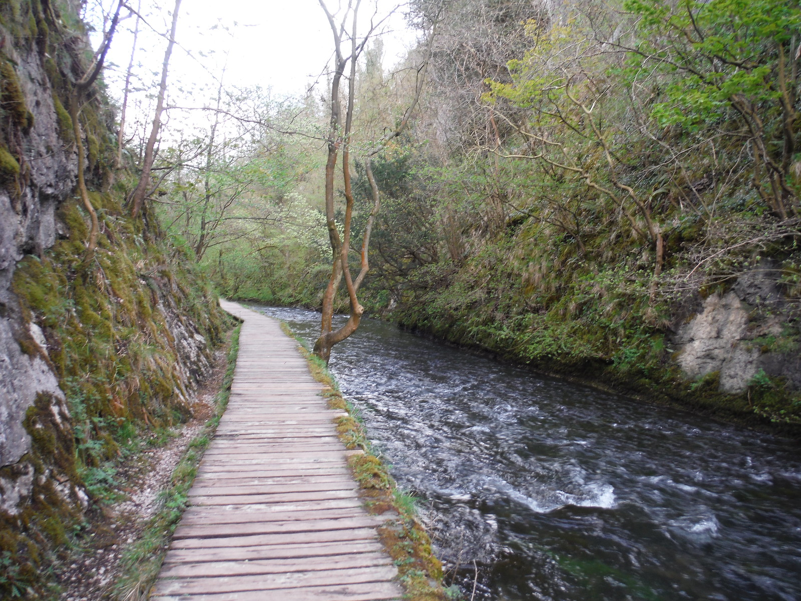 Raised Boardwalk, Dovedale SWC Walk 326 - Dovedale (Ashbourne Circular)