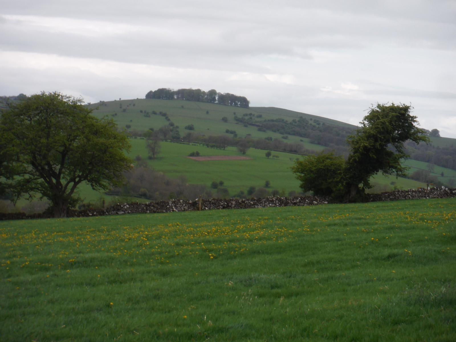 Hazelton Clump from Spend Lane SWC Walk 326 - Dovedale (Ashbourne Circular)