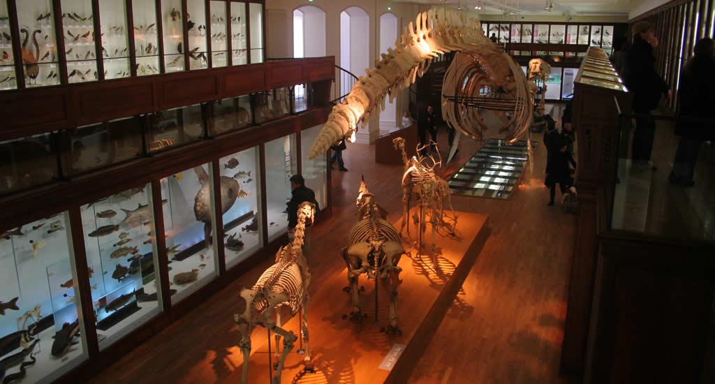 Musee d'Histoire Naturelle, bezienswaardigheden Nantes | Mooistestedentrips.nl