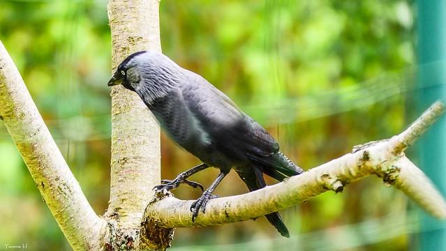 Bird - 6732