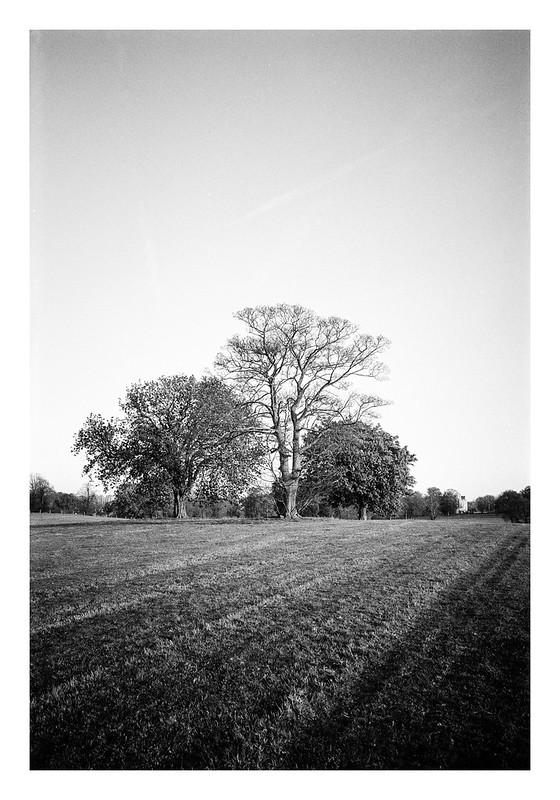 FILM - Tree-o