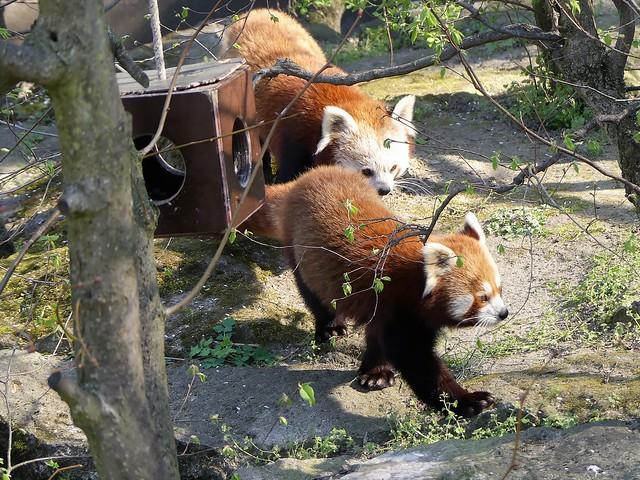 Tierpark Berlin