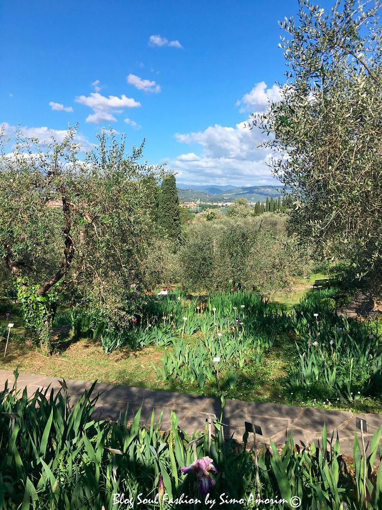 O jardim ainda conta com lindas oliveiras