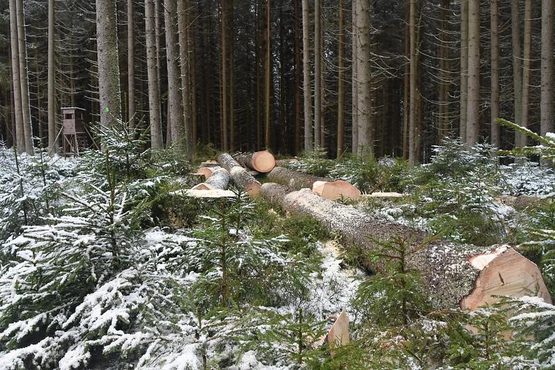 xwx Těžba dřeva