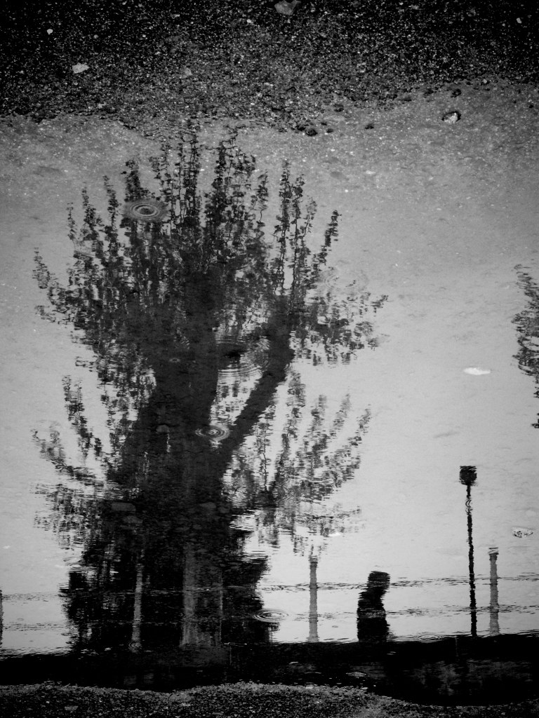 Rain puddle picture