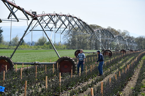 Linear Irrigation Project, Keudell Farm, Marion County | by NRCS Oregon