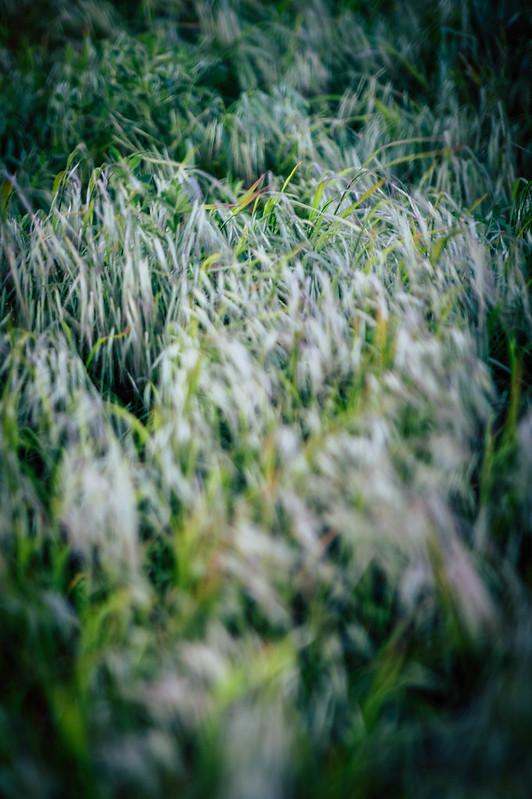 Grass_left
