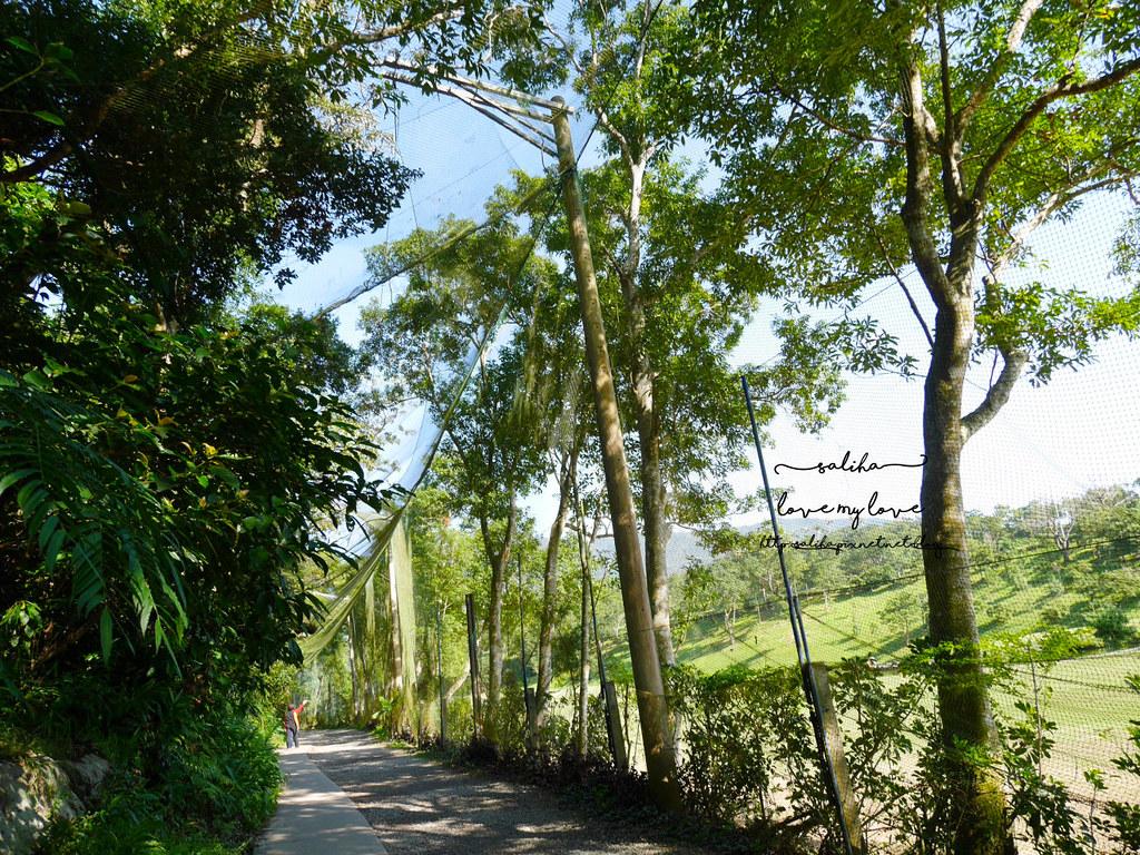 宜蘭礁溪必遊景點推薦林美石磐步道踏青登山 (3)