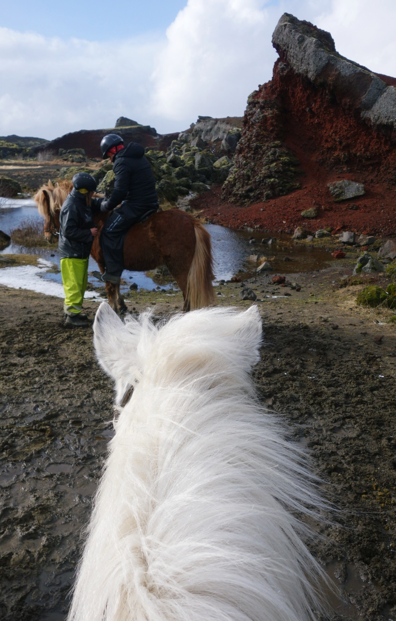 Icelandic horseback riding