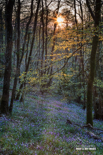 wildgarlic spring garlic woods sunset nature devon bluebells exeter longdown cotleywoods sunbeams