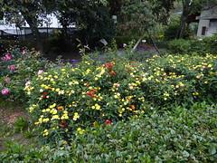 Jardin Botanico de Quito
