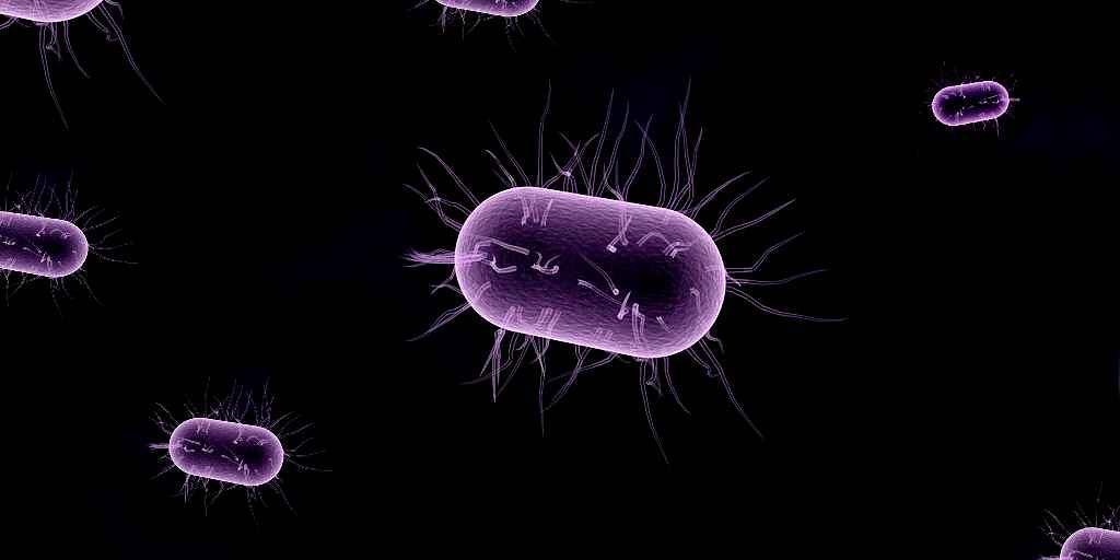 mécanisme-contre-bactéries