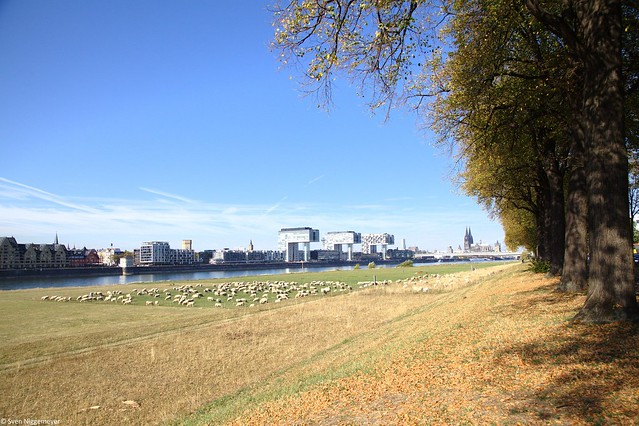 Blick von den Poller Wiesen auf die Severinsbrücke und den Rheinauhafen am 15.10.18